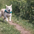 You can face charges of protection and restraining order violation in Weld county and across Colorado for seeing your dog.