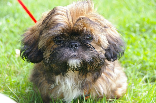 A man is wanted for stealing someone's puppy off their front lawn in broad daylight. If caught, he will likely be facing Theft charges.